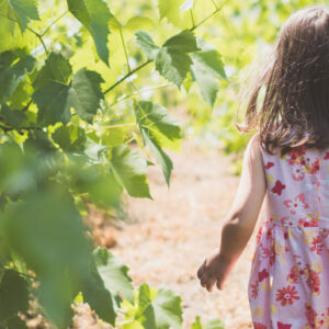 This is a photo of a little girl walking in a vineyard